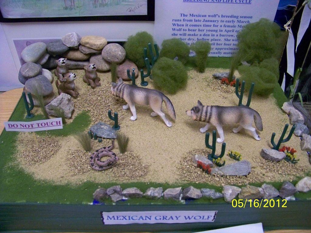 Arctic wolf diorama - photo#9