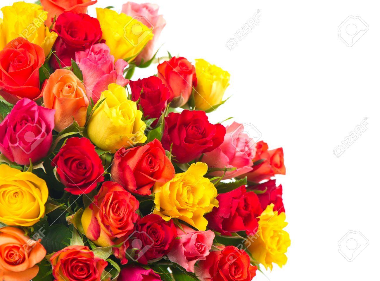 Rosas Sobre Fondo Blanco Ramo De Rojo Rosa Amarillo Naranja Colores Flores Rosa Foto De Archivo 27503920 Flores De Cumpleaños Flores Plantas Jardin