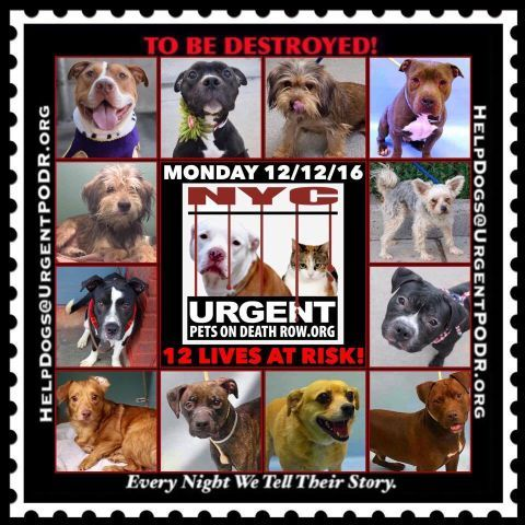 12 Beautiful Lives To Be Destroyed 12 12 16 Nyc Acc So Many Great Dogs Have Been Killed Puppies Throw Away Mamas Dogs Best Dogs For Families Dancing Cat