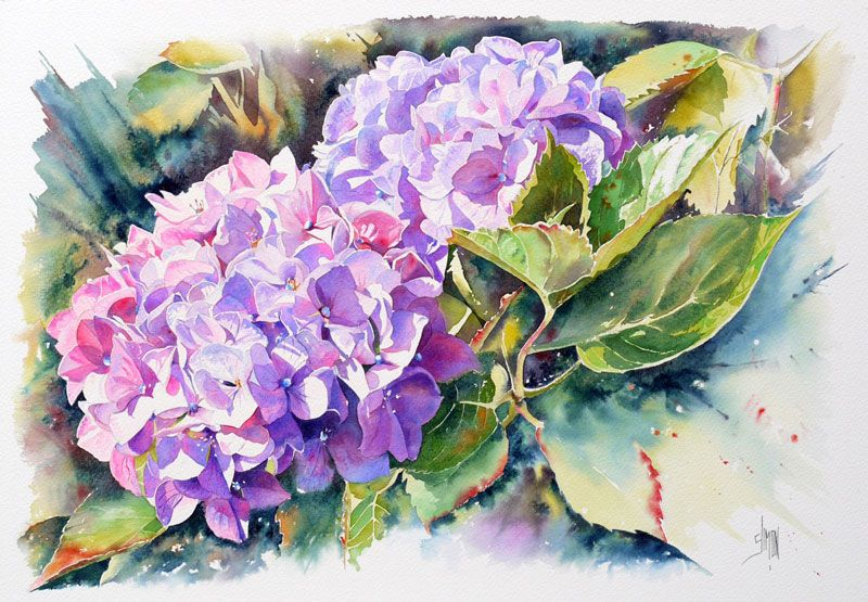 Aquarelle Hortensia Joel Simon Flowers In Watercolor