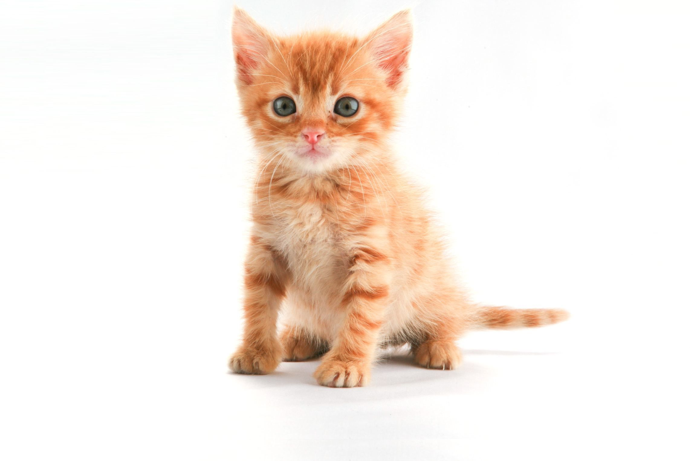 And I would have this kitten and name it Gingersnap Gingersnap