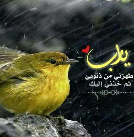 طهرني ثم خذني يا رب Animals Find Image Image