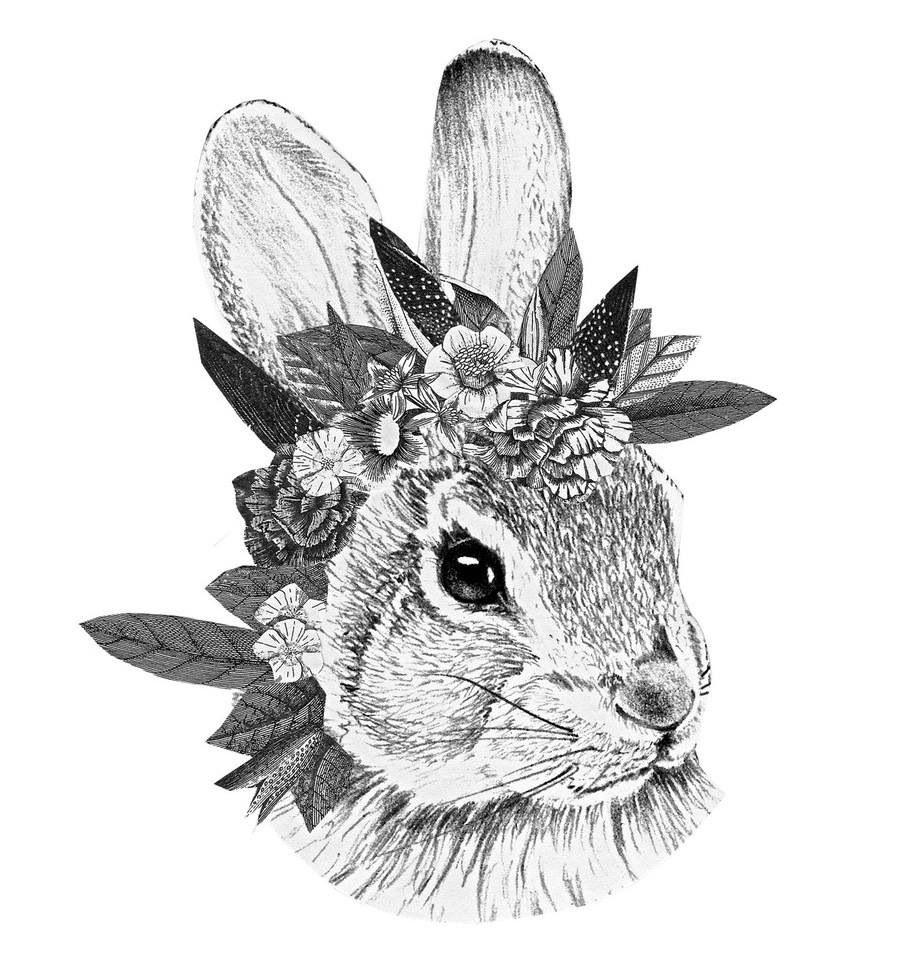 Pin von denise sch n auf artspo pinterest hase tiere zeichnen und drucken - Hase zeichnen ...