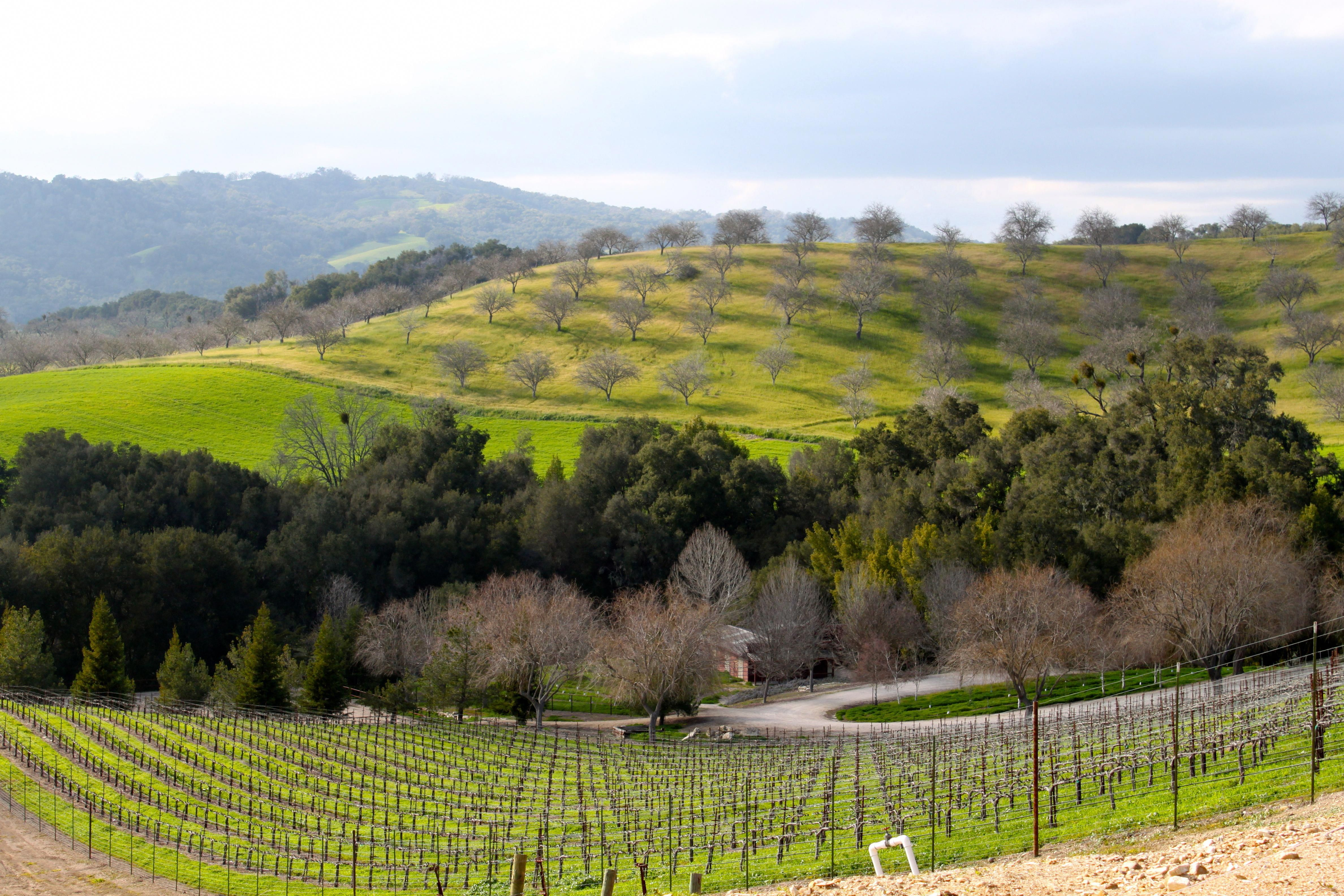 Paso Robles, California Opolo winery view
