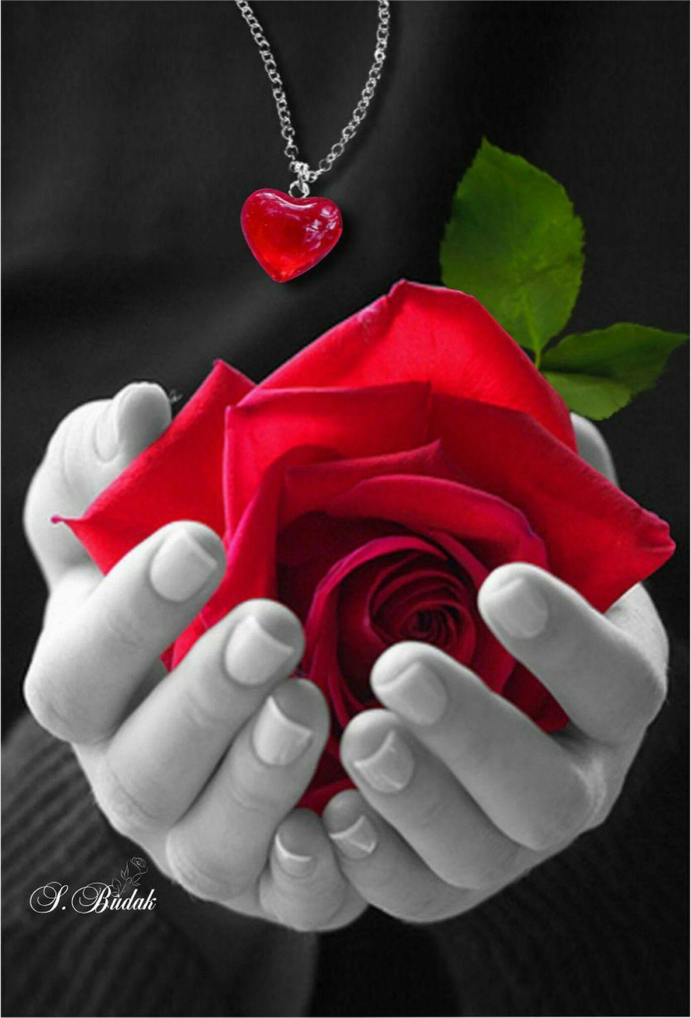 para algum muito especial voc fleurs pinterest beautiful flowers para algum muito especial voc izmirmasajfo Images