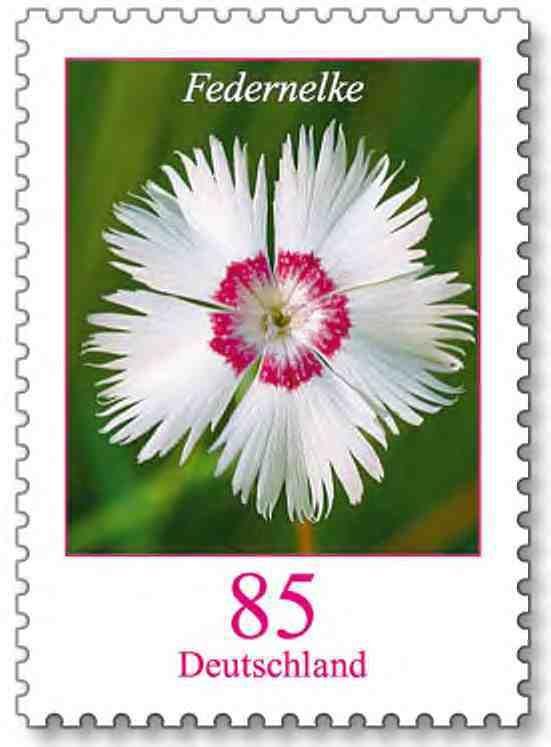 deutschland briefmarke blumen 85 cent aktuelle