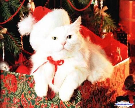 hd kitten christmas wallpapers new year christmas new years cat cat desktop