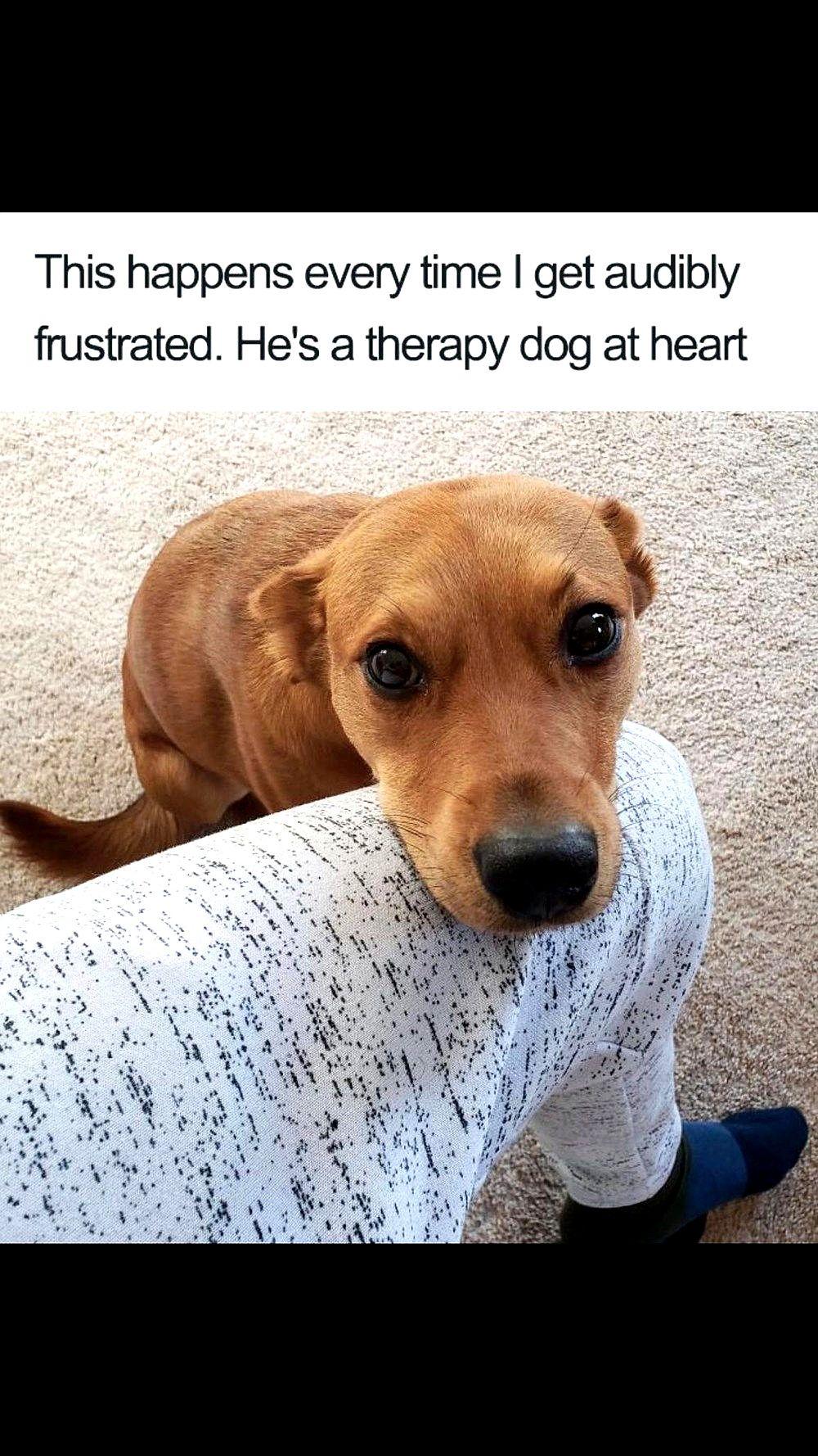 Laughing So Hard Dog Meme Dog Meme Baby Daddy Funny Dog Memes Cute Dogs Cute Baby Animals