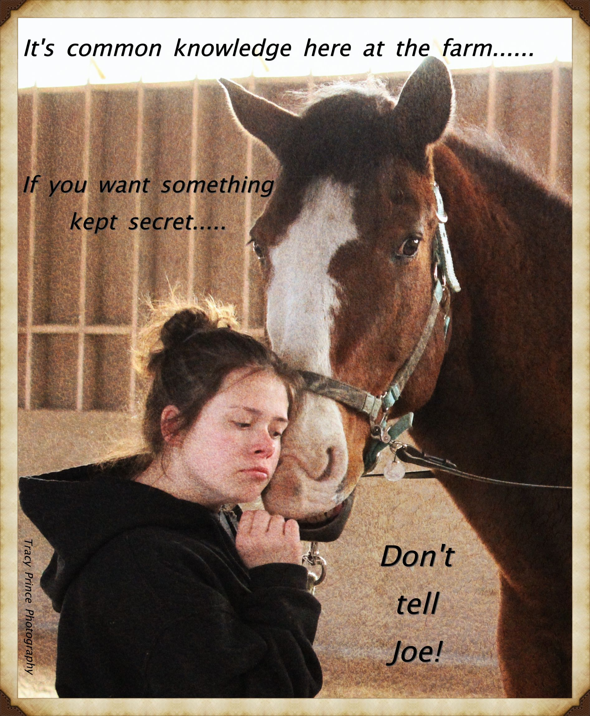 Wwwgaitsofharmonywebscom #Horse #Meme #Equine #Therapy #