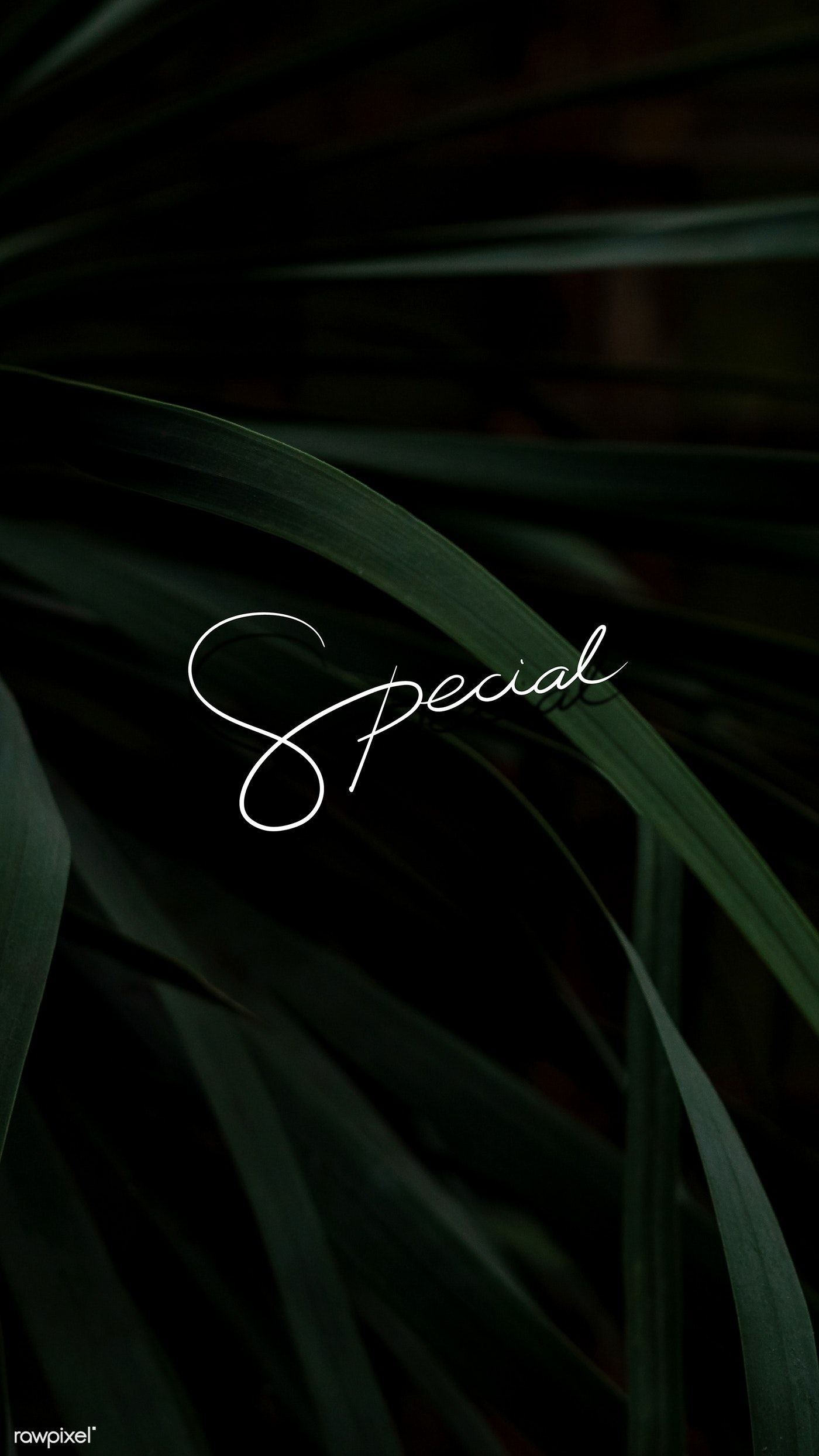 Special Text On A Leafy Background Mobile Wallpaper Free Image By Rawpixel Com Green And Black Background Phone Wallpaper Design Black Background Wallpaper