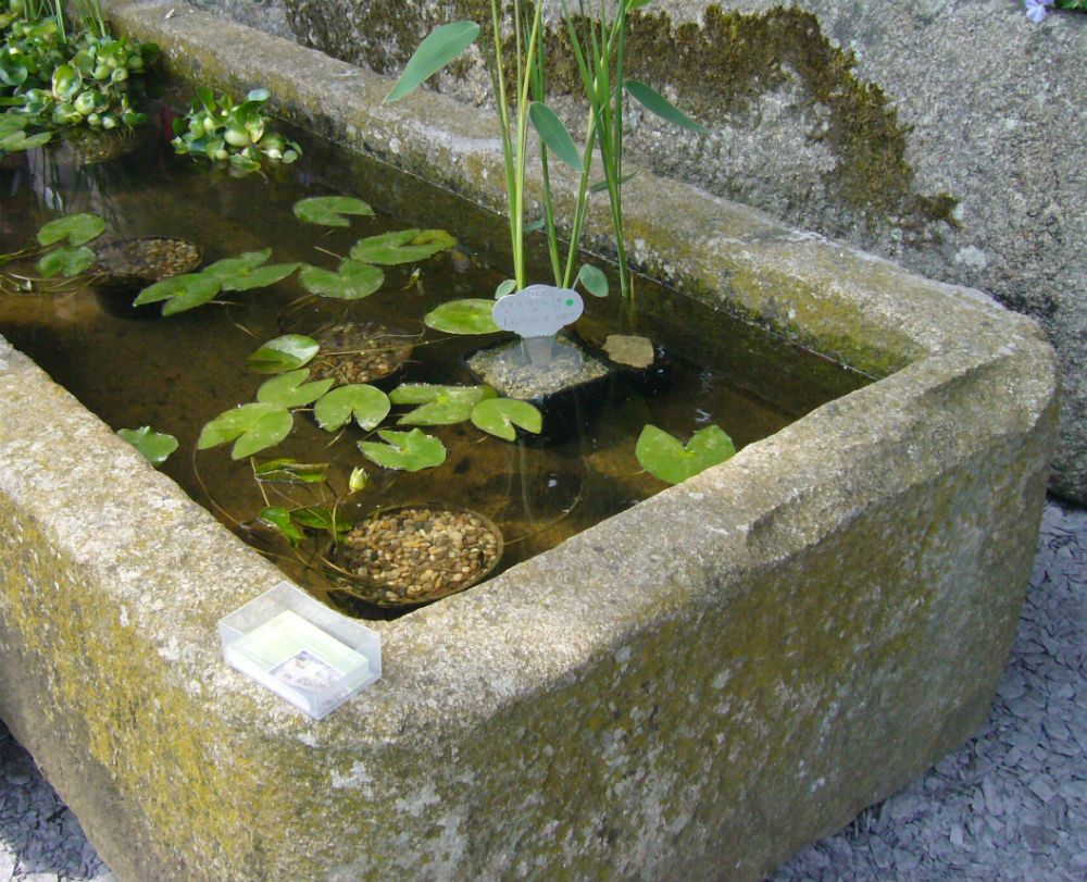 Stone troughs in the garden if it s all about the pot for Garden pond stones