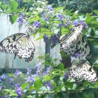 Gainesville Butterfly Garden With Livi Butterfly Garden