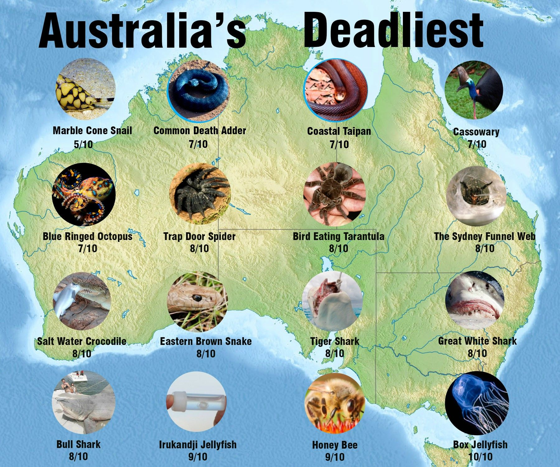 the top 30 australian dangerous animals though sharks