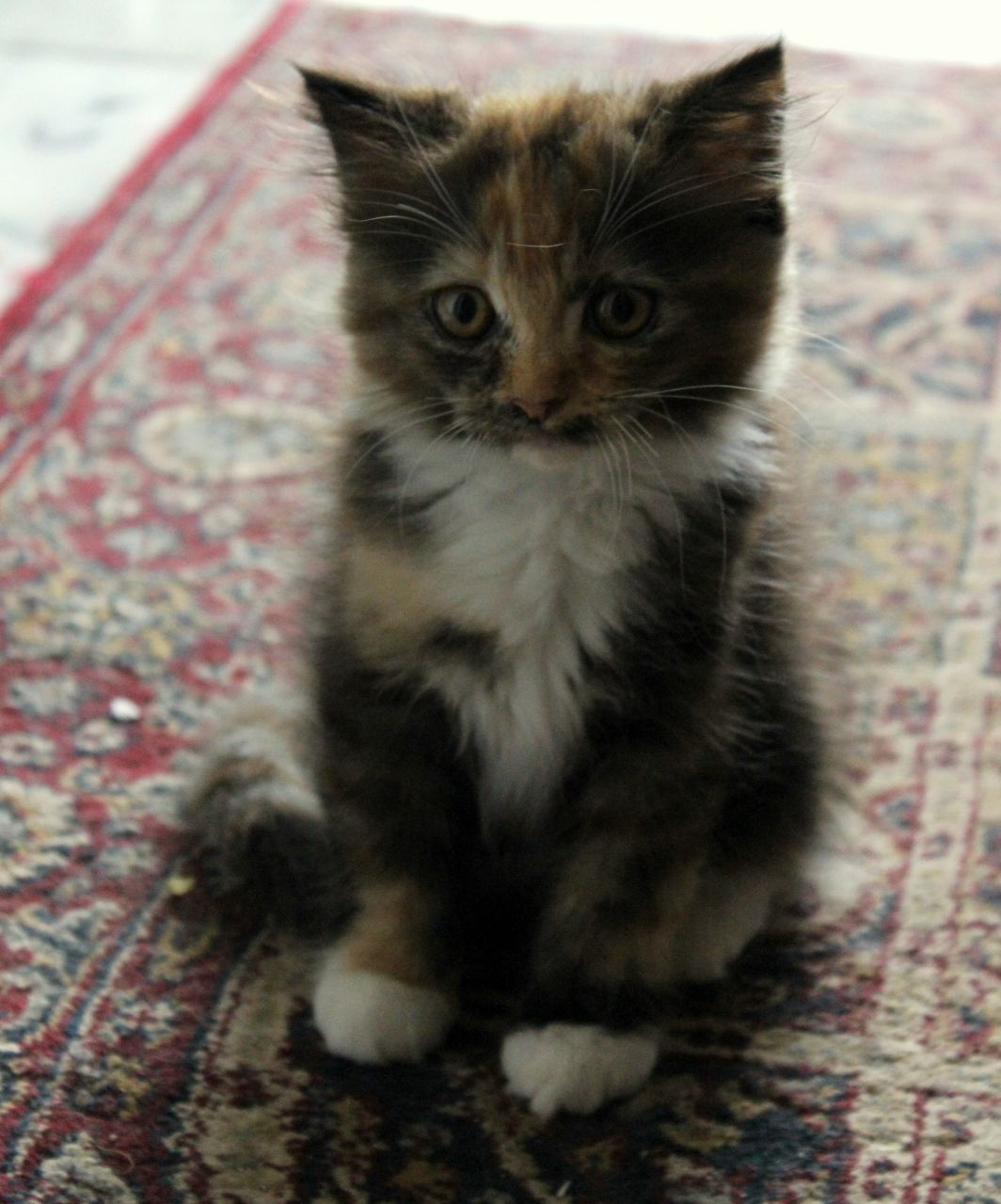 Cute As Can Be Kittens Cutest Cute Kittens For Sale I Love Cats