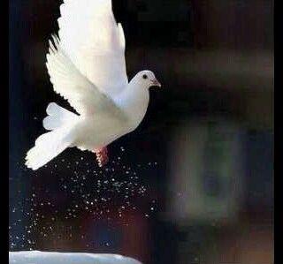 سيَأتيْ الضِياءُ برَغْمِ الغُيُومْ ؛ وَتشْدو الطُيُوْرُ بذَاكَ القُـــدُومْ ツ