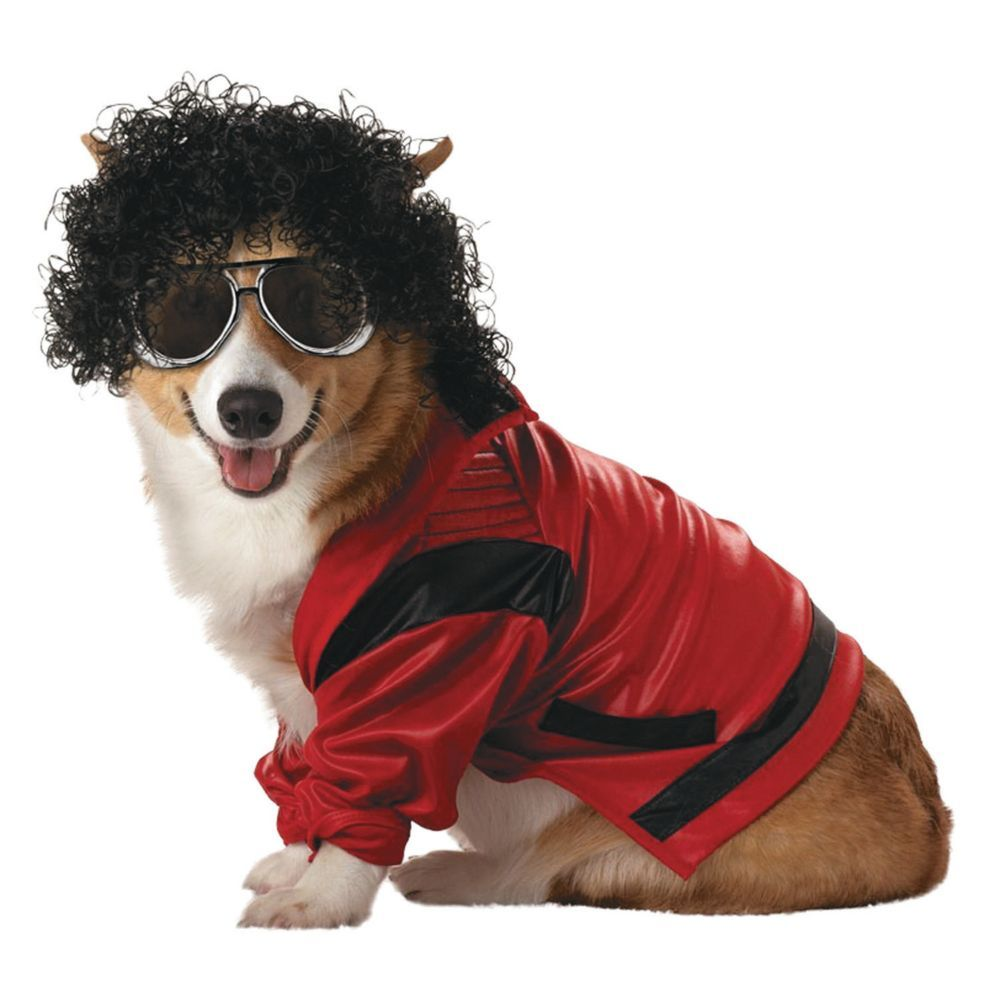 Pop King Dog Costume - Extra Small  sc 1 st  Pinterest & Pop King Extra Small Pet Costume | Products