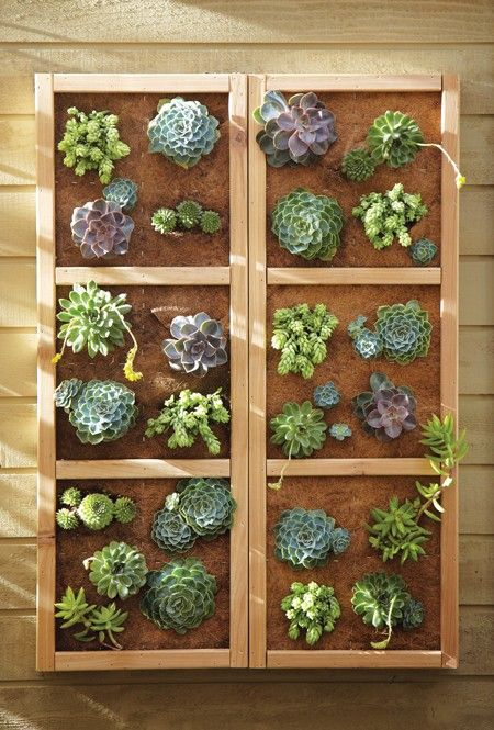 Who says you can't #organize plants on a wall? #DIYProject from @homedepotcanada via @downshiftingPOS