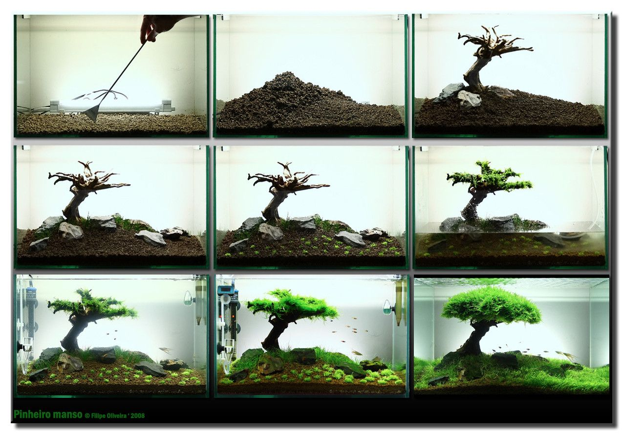 How To Make An Aquascape Picture