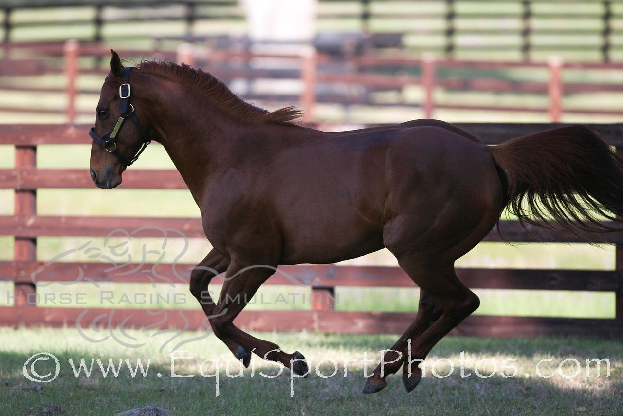 Wilko is heavy muscled horse, athletic and very well