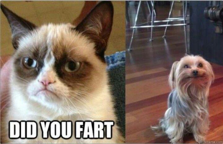 Fart Memes Moment you walk into   Picsmine   Animal Fart Memes
