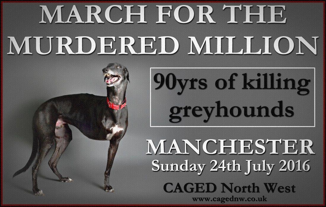 Greyhound Racing Began In The Uk On Sunday 24th July 1926 At Belle Vue Stadium Greyhound Greyhounds Racing Grey Hound Dog