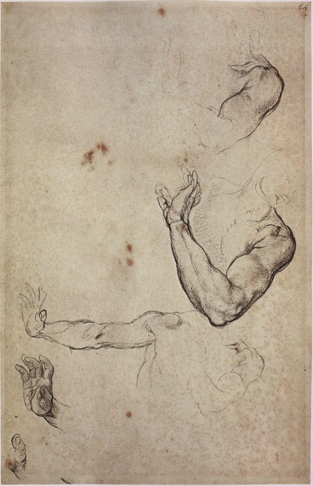 The Classical Pulse: Michelangelo: Arm Studies, Part 1