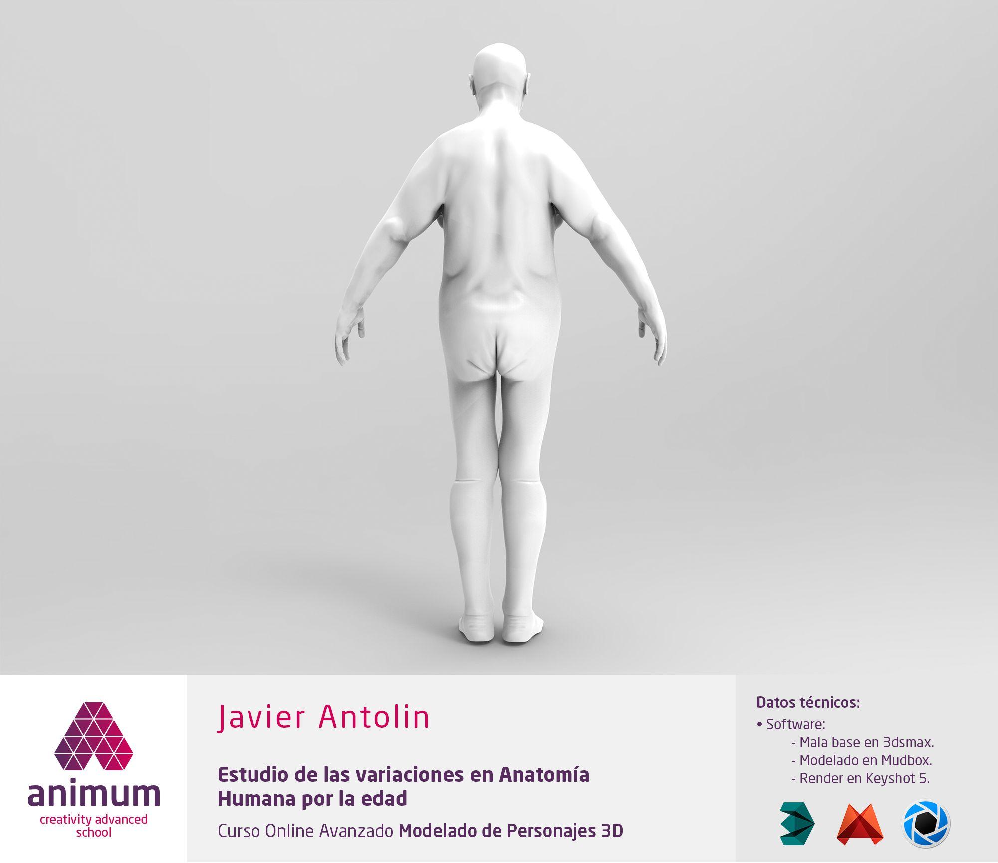 Estudio de anatomía humana. Variaciones por la edad. Vista posterior ...