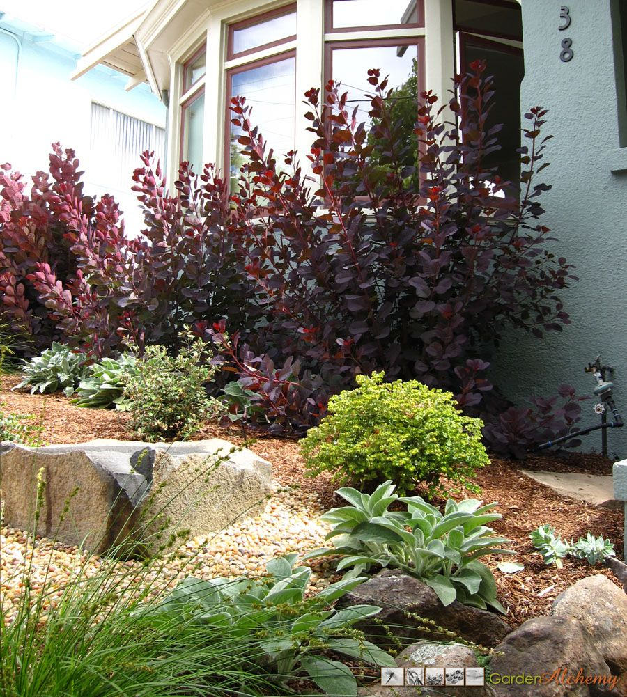 Smoke Bush Accents And Compliments House Color. The Front