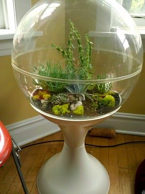 Globe Terrarium Saw One Of These On Ebay This Would So Help Keep The Cats Out Of My Plants Large Terrarium Terrarium Vintage Planters