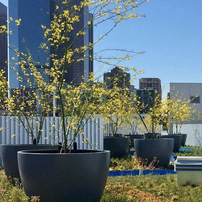 Downtown Collection Planters By Tournesol Siteworks