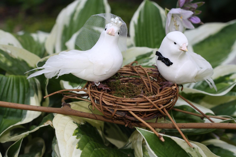 свадебные птицы картинки установлен имплантат, работа