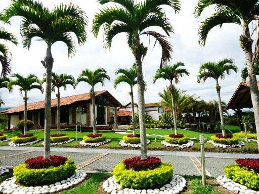 Palmeras manila decoradas con anillos de plantas de color for Jardines con palmeras
