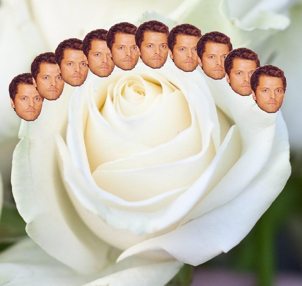 Flower Misha Collins Crown Haha Flower Crowns Pinterest