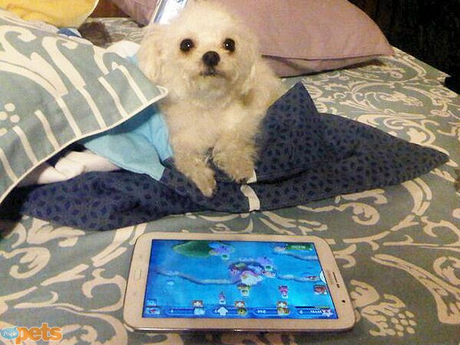 The Cutest Pets on Twitter This Week! | PLUGGED IN | Kids today, sigh. You just can't pry them away from their electronics!