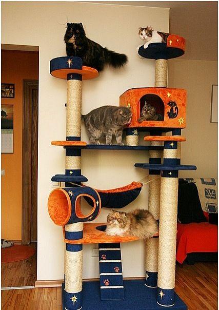 Cats enjoying their cat tree. Домики для кошек - фото 12 # ...