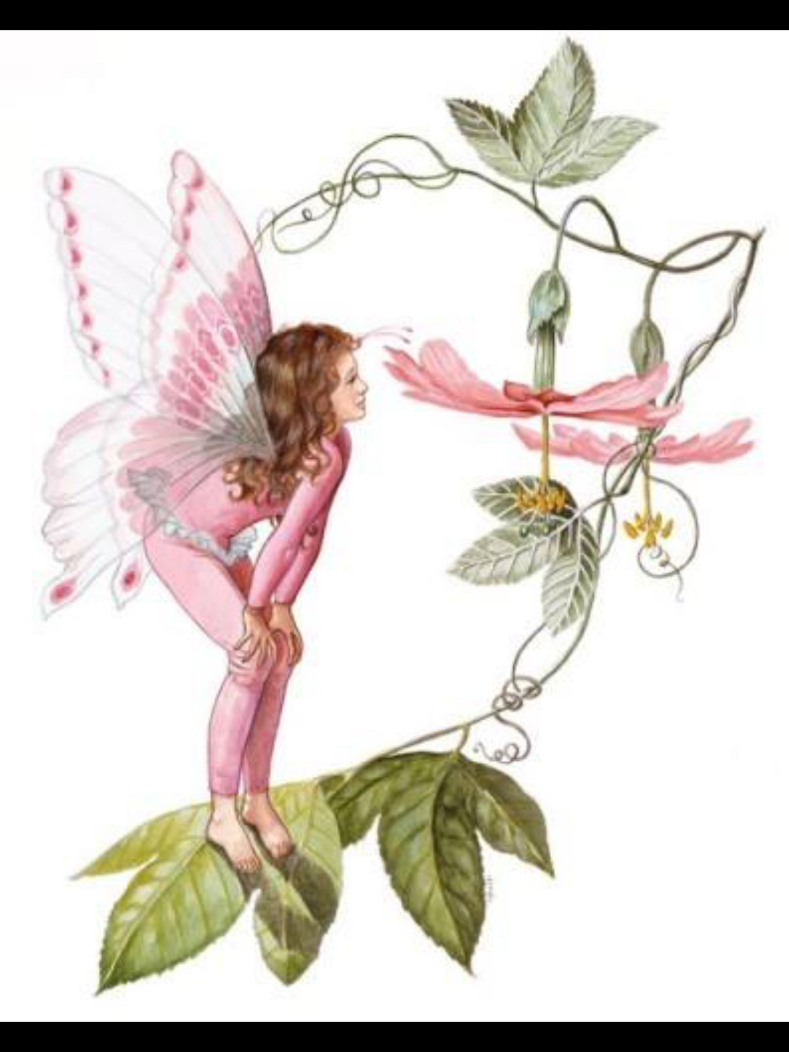 Pink Flower Fairy Fairy Tales Dragon Scales Pinterest Fairy