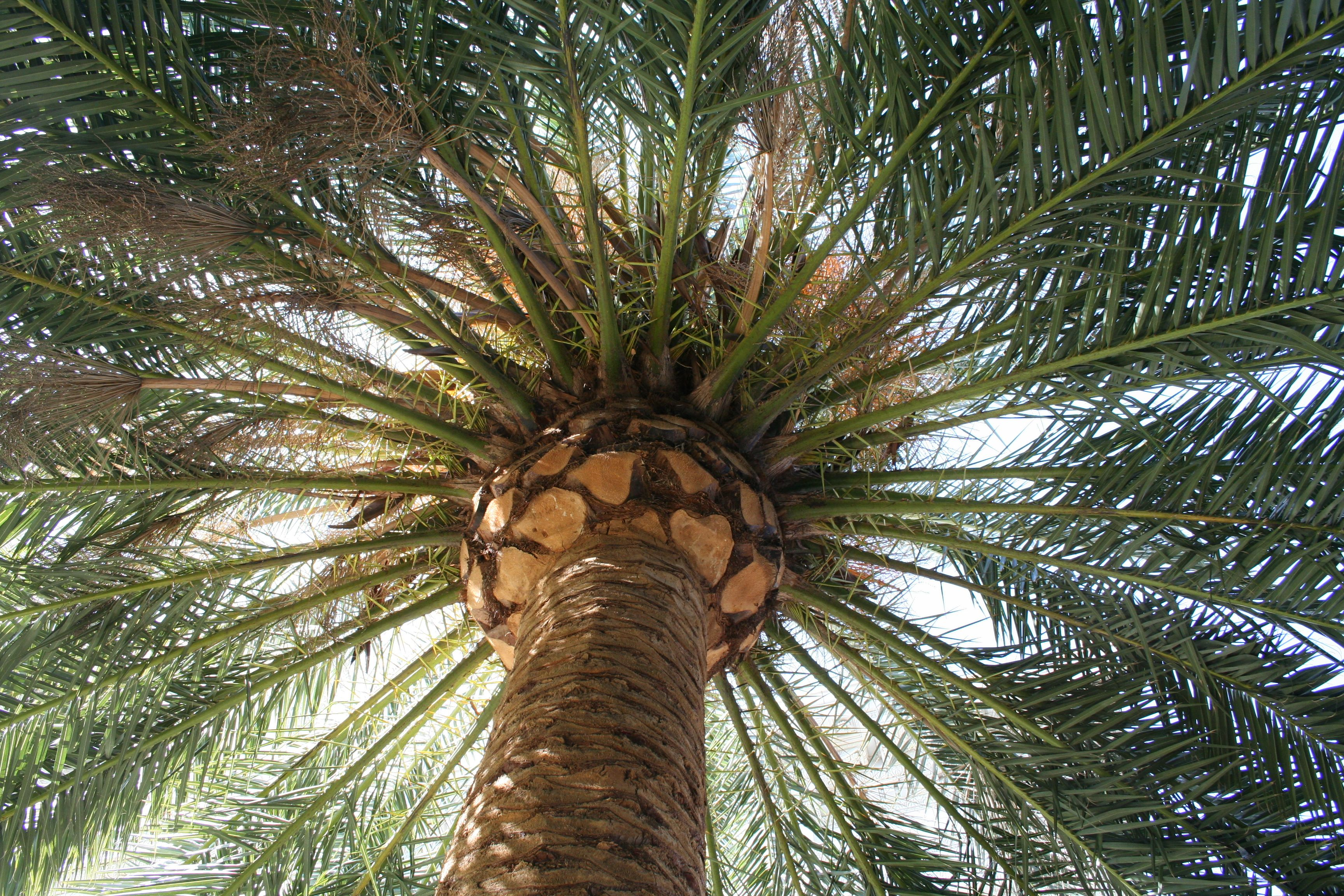 Palm trees and sunshine by John Saveland (With images ...