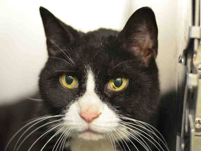 Nyc To Be Destroyed 05 01 15 Wonderful Orbitz Is Being Stoic Considering She S Lost Her Person Her Home On A Kill List Orbitz Int Saving Cat Cats My Animal