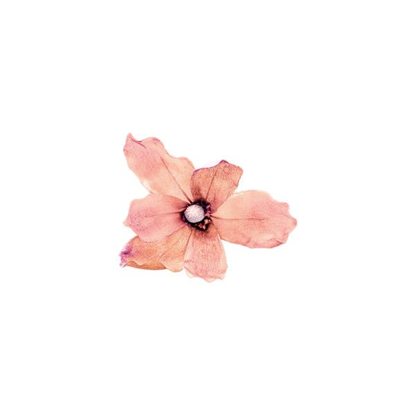 Arana — альбом «SCRAP KITS / SCRAP KITS / SK Autumn Splendor» на... ❤ liked on Polyvore featuring flowers