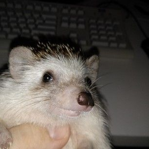 So no matter what's going on today, just be like the hedgehog… | 17 Hedgies Who Will Make You Smile