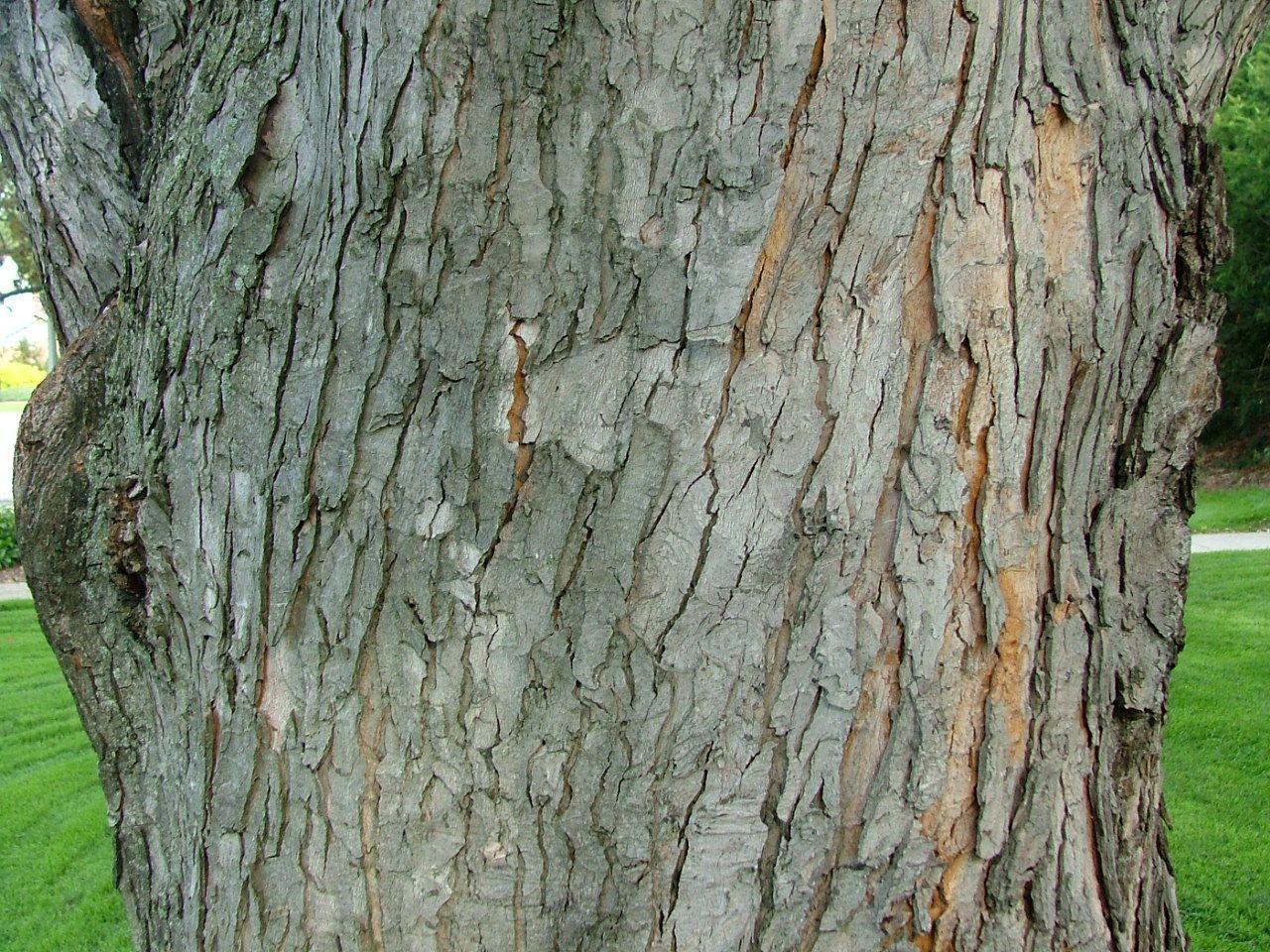 Pin By Tobi Oyenuga On Trees Tree Bark Silver