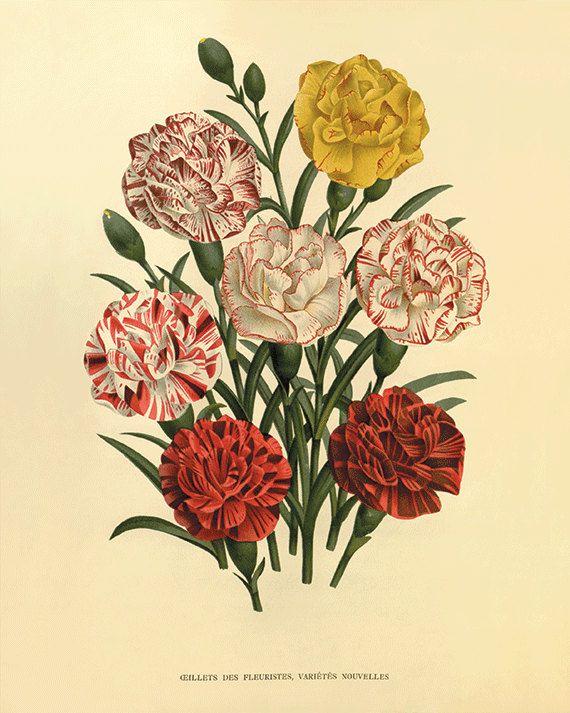 Carnation Art Print Antique Flower Art Botanical Art Prints Etsy Flower Prints Art Botanical Art Prints Vintage Botanical Prints