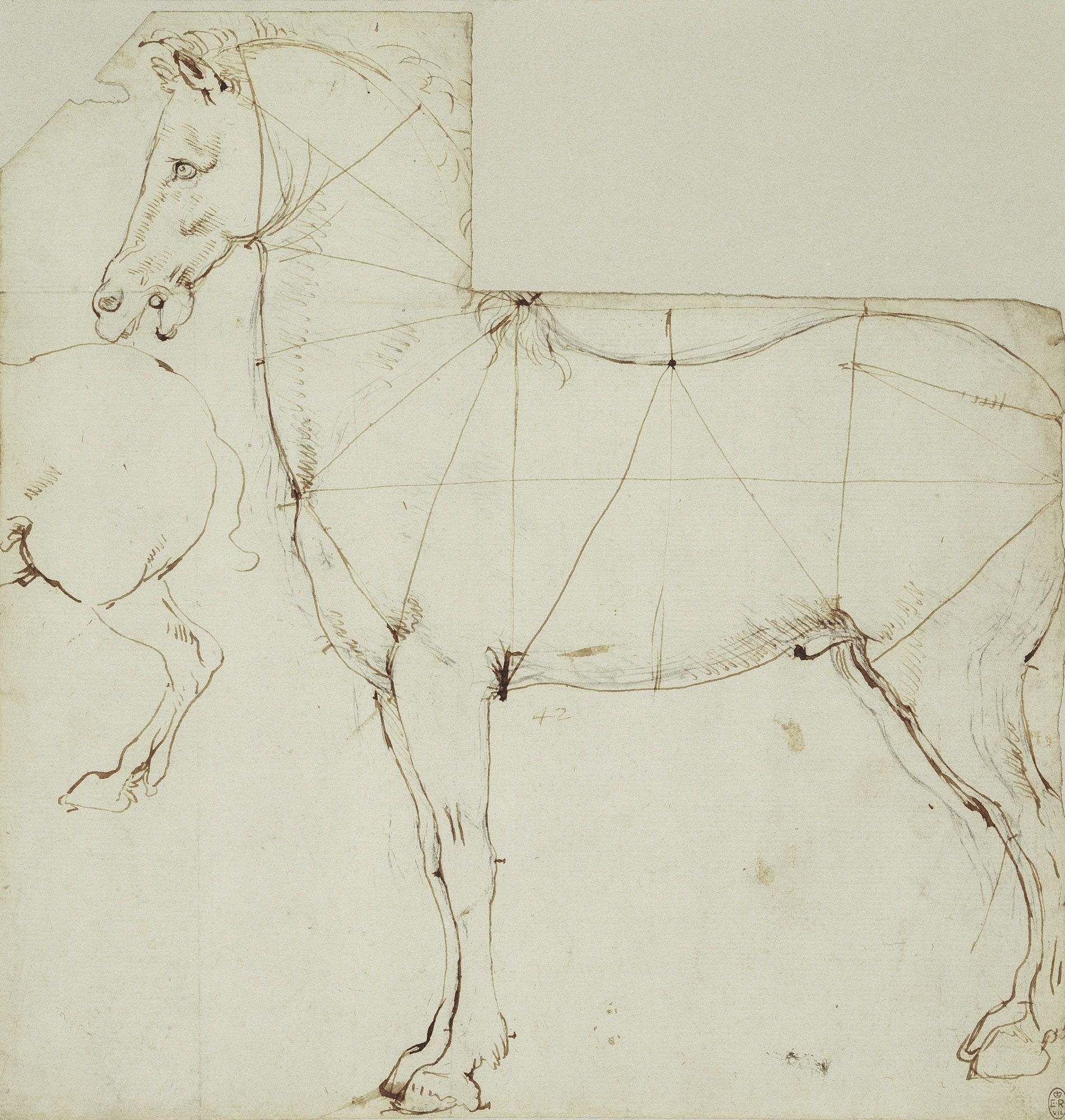 A horse in profile divided by lines Leonardo da Vinci (Vinci 1452 ...