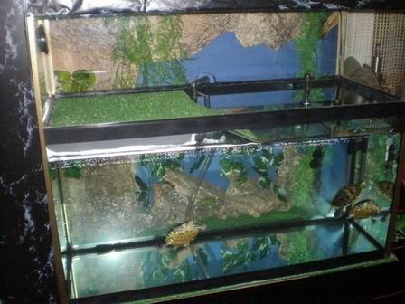 Acuario para tortugas de agua aprender a cuidar animales for Peceras para tortugas