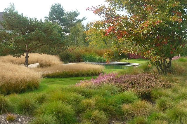 Love the use of mass planted grasses to create a soft for Landscape design using ornamental grasses