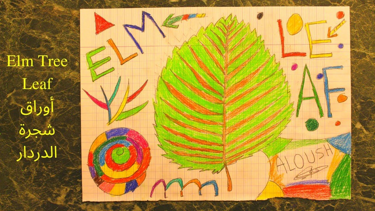 How To Draw The Elm Tree Leaf كيفية رسم أوراق شجرة الدردار Colored Pens Elm Tree Tree