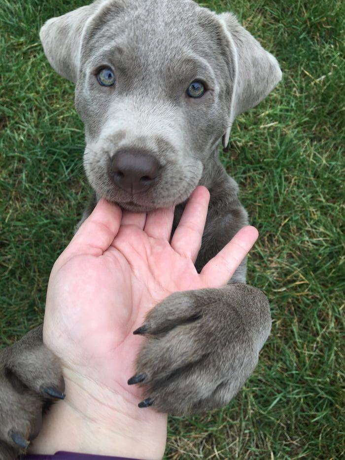 Photo of Beautiful pupper