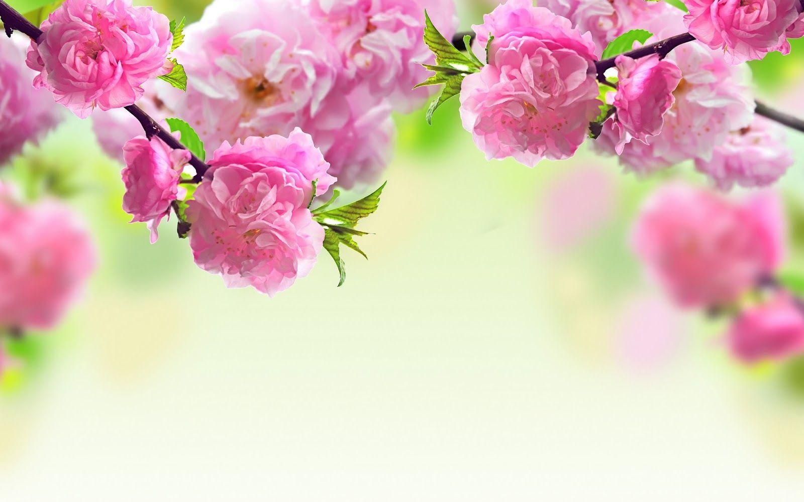 Desktop Wallpaper Hd Flowers 1920 1200 Wallpaper Hd Flowers 39 Wallpapers Ad Spring Flowers Wallpaper Spring Flowers Background Flower Background Wallpaper
