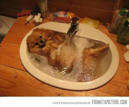 I has a swim