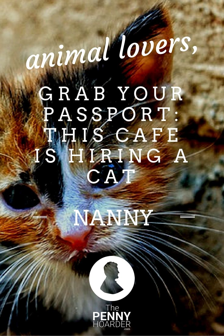 Animal Lovers, Grab Your Passport This Cafe is Hiring a